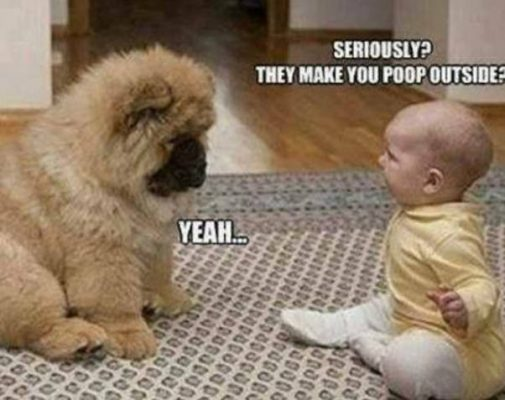 Baby and dog funny conversation.